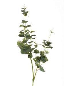Eucalyptusoksa, 75 cm