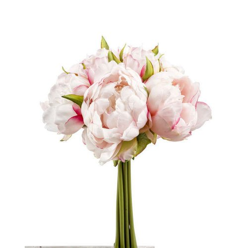 Pionikimppu, vaalea roosa