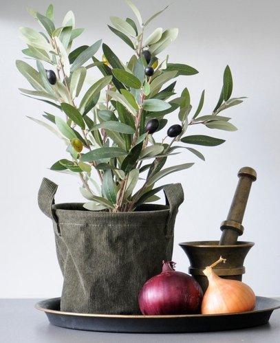 Oliivipensas, 36 cm