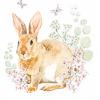 Servetti, Rosi Rabbit