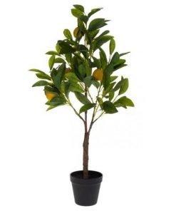 Sitruunapuu, 90 cm