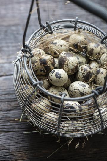 Onion basket, sipulikori