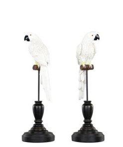 Papukaija -koriste, 24 cm